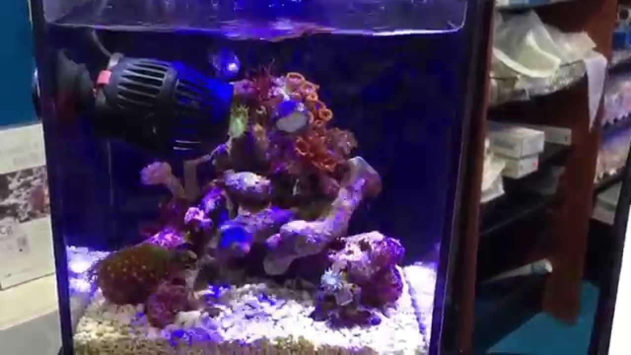 Smallest 1 5 gallon mini nano reef saltwater aquarium tank for Saltwater fish for small tank