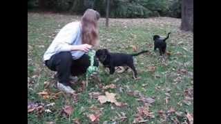 Sookie Good Dog Rescue
