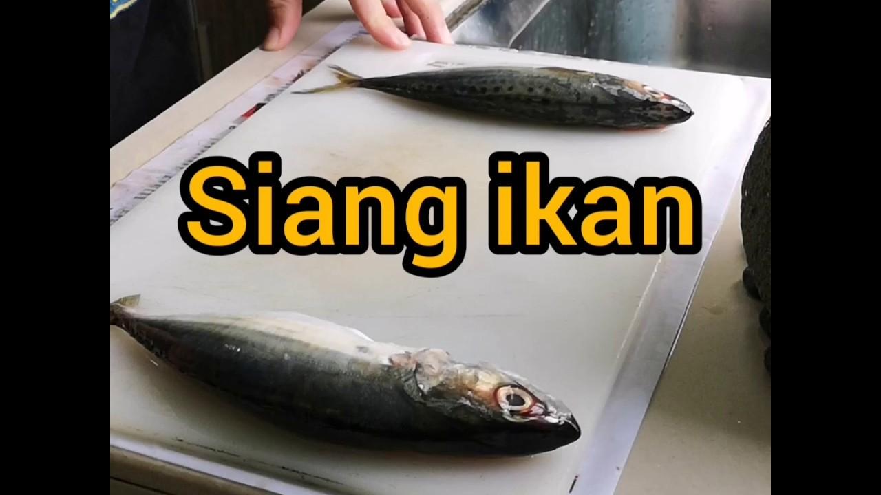 Download Cara Siang Ikan Cepat Mp4