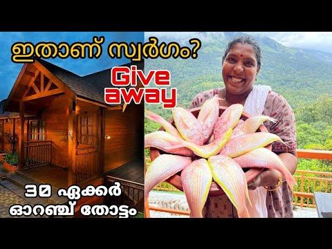 🔥ആഴക്കടൽ കിളി മീൻ ആയിട്ട്  ഓറഞ്ച് തോട്ടത്തിൽ 🍊 Munnar Vlog