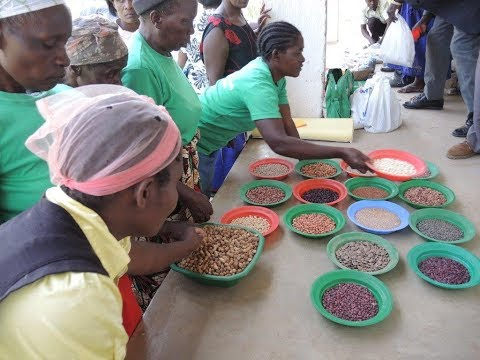 Farmers' rights to seed: Experiences from Malawi