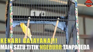 KSB CUP SEMARANG : KENARI GAJAYANA!! Main Satu Titik NGEDURR Tanpa Jeda