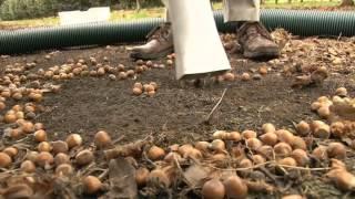 Harvester Nut hustler