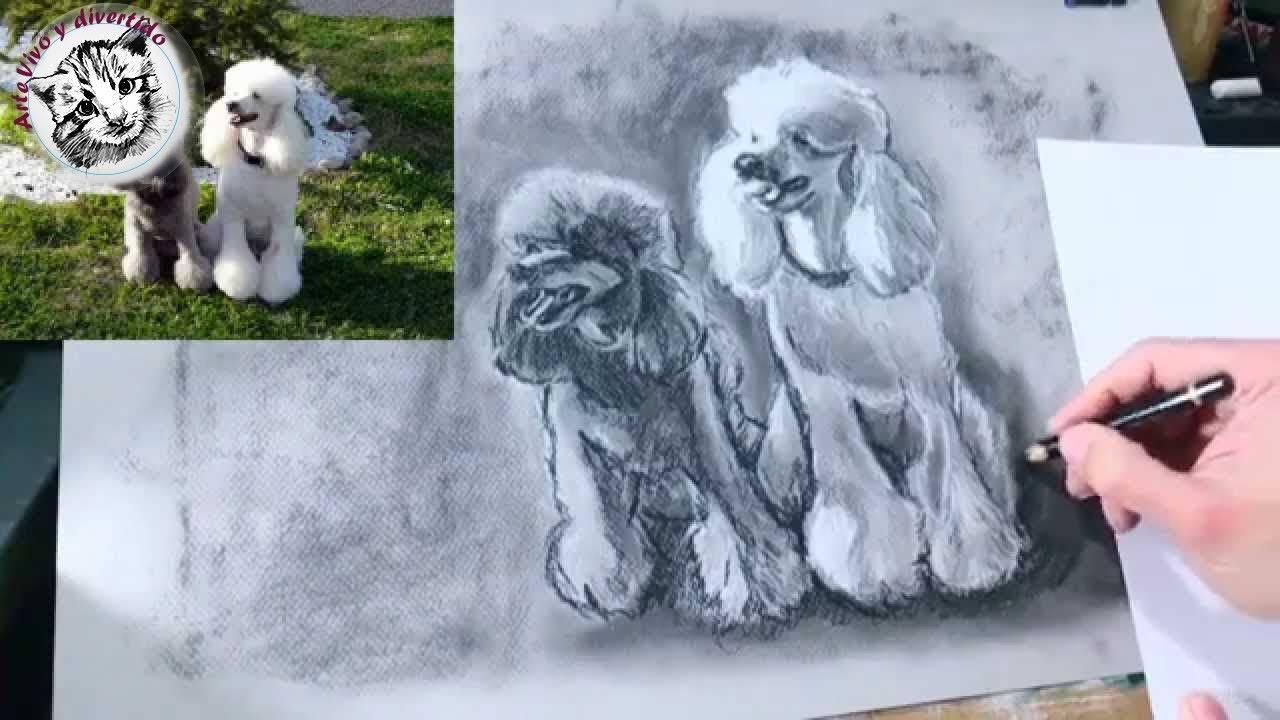 Como #Dibujar Perros A Partir De Fotografias: Dibujo Al