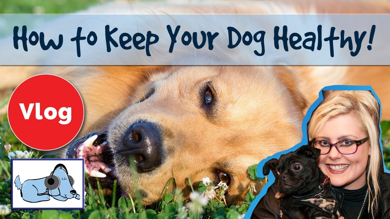how to keep your dog healthy and happy