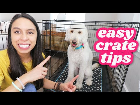 FIRST NIGHT: Crate Training 5 Easy Steps