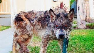 Jeder fürchtete sich vor dem Wolf, bis herauskam was er wirklich ist!