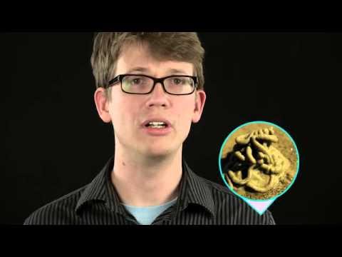 01   Crash Course Biology   23   Complex animals  Annelids & arthropods
