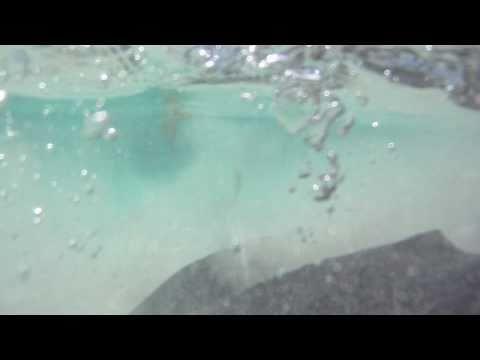 Feeding Sting Rays! Exuma Island