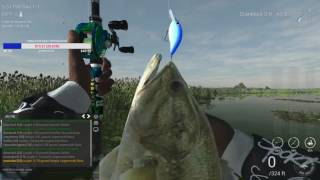 Fishing Planet How to catch unique largemouth bass in FL