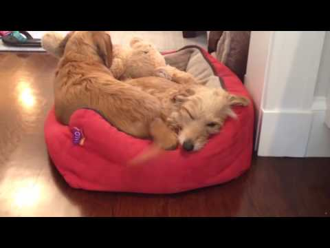 Funny cats,  funny dogs, cute animals - Animal Compilation May 2016   Funny Berry Animals #69