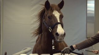 Equine Hospital - Veterinary Medicine