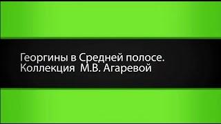 Лучшие сорта георгинов: классика и модные сорта для средней полосы России(, 2016-04-27T19:26:39.000Z)