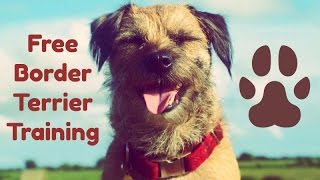 Border Terrier Training ** Free Training Course **