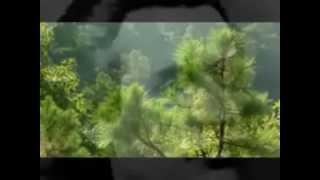 M Eminescu, E trist, recita Adrian Pintea