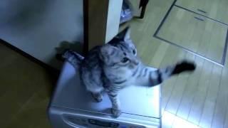 我が家の末っ子猫、ゆき。 通称、ゆきち、またはうっきー。 只今8カ月...