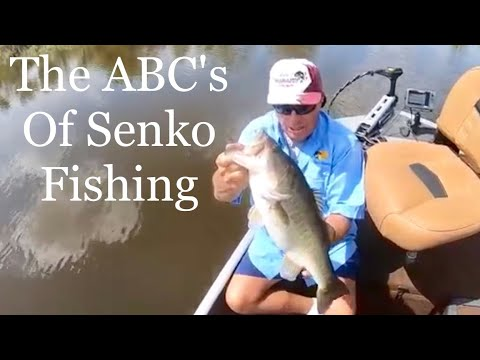 ABC's Of Senko Fishing