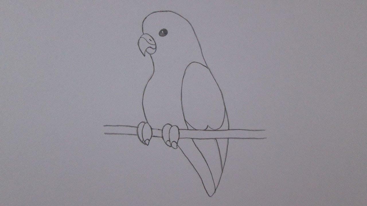Dibujo De Quetzal Youtube