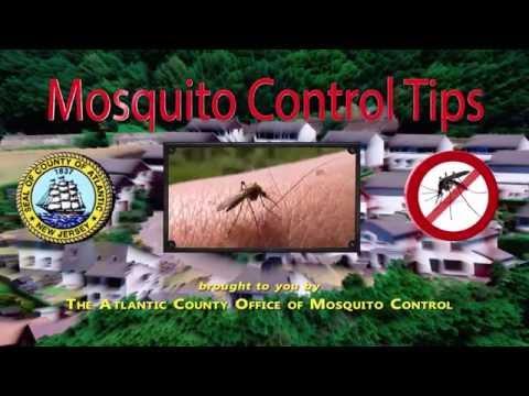 Atlantic County Mosquito Control Tips