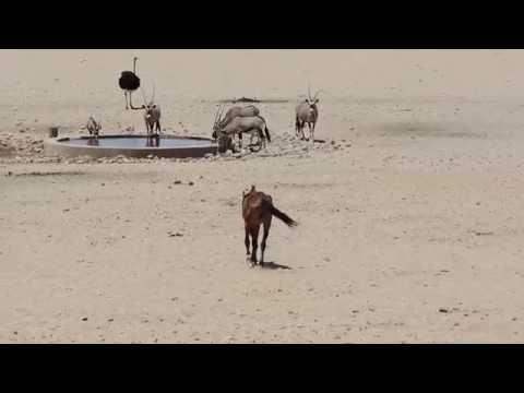 Wild Horses Namib