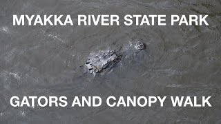myakka river state park and southern florida vlog   north port fl