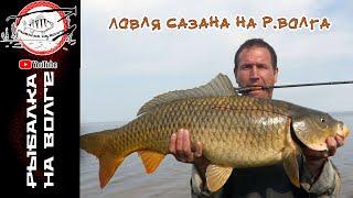 Ловля САЗАНА на червя Чебоксарское водохранилище