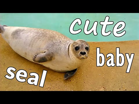 Cute baby seals doing funny things compilation