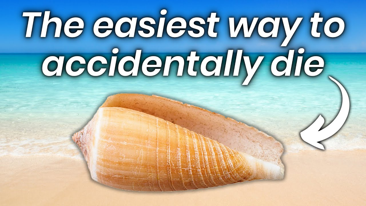 How These Seashells Can Kill You (be careful where you touch them)