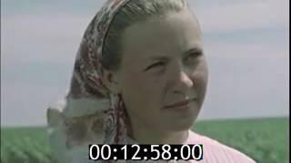 """Так мы живем!  Колхоз """"Россия"""" 1958г."""