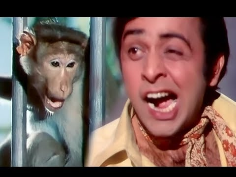 Vinod Mehra & Monkey - Funniest Comedy Scene - Do Phool