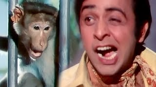 Vinod Mehra & Monkey - Funniest Comedy Scene - Do Phool