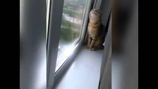 Котэ смотрит в окно и о чем-то размышляет вслух.