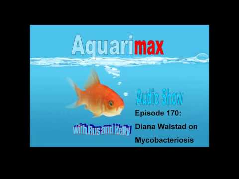 Interview with Diana Walstad: Mycobacterium