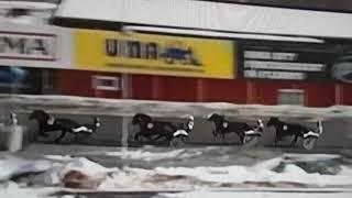 Travolycka Umåker v65 - Horse racing accident Sweden