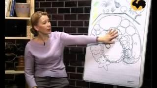 Как делается правильный план сада - схемы и устройство