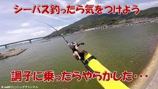 やらかしてもシーバス釣りって最高に楽しいですよね!! 【HITルアーAmazo...
