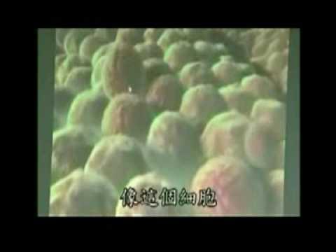 癌細胞的形成與如何將癌細胞破壞成好細胞