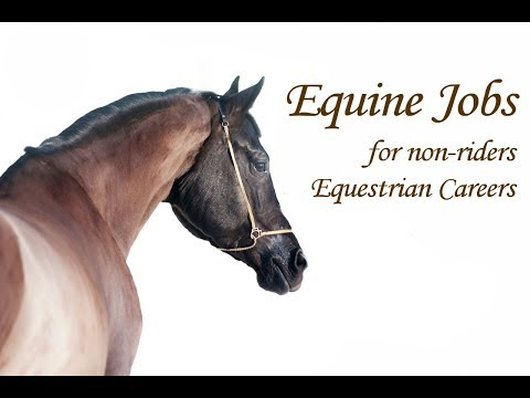 Equine Jobs For Non-riders - Equestrian Careers