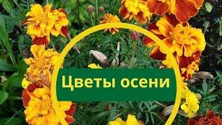 Последние цветы осени. Осени чудесные цветы. Осенние цветы.
