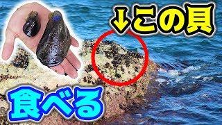 釣り場に生えてる貝を買って食べてみた。 thumbnail