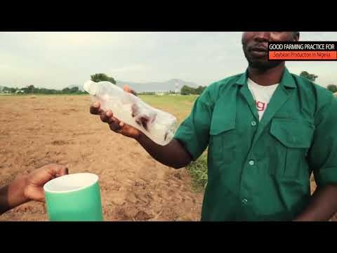 Good farming practice for soybean production in Nigeria