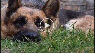 История о верной собаке которая ждала хозяйна 7 лет