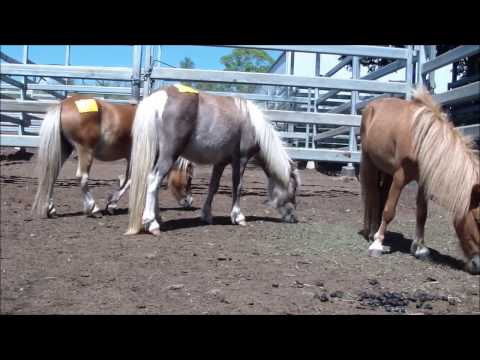 Horse Auctions 25th February 2017