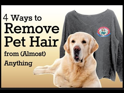 How to Remove Pet Hair 4 ways ! Clean Pet Hair for well !