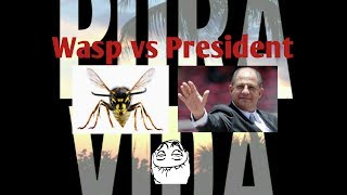President of Costa Rica eats a wasp while speaking a report