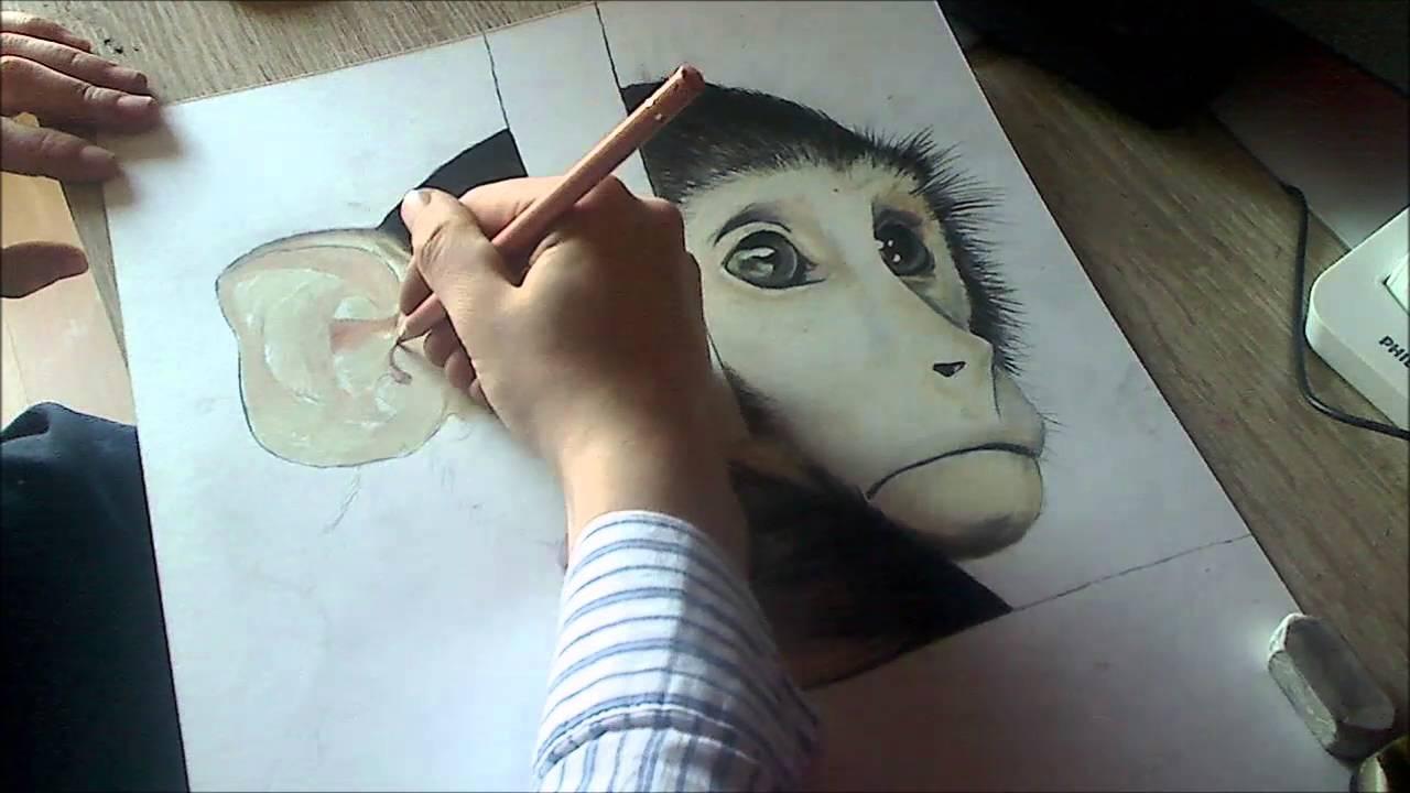 Dessin de singe realiste youtube - Dessin de singes ...