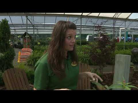 Pike Nurseries Beneficial Bugs