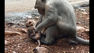 Poor baby monkey want to play with mom