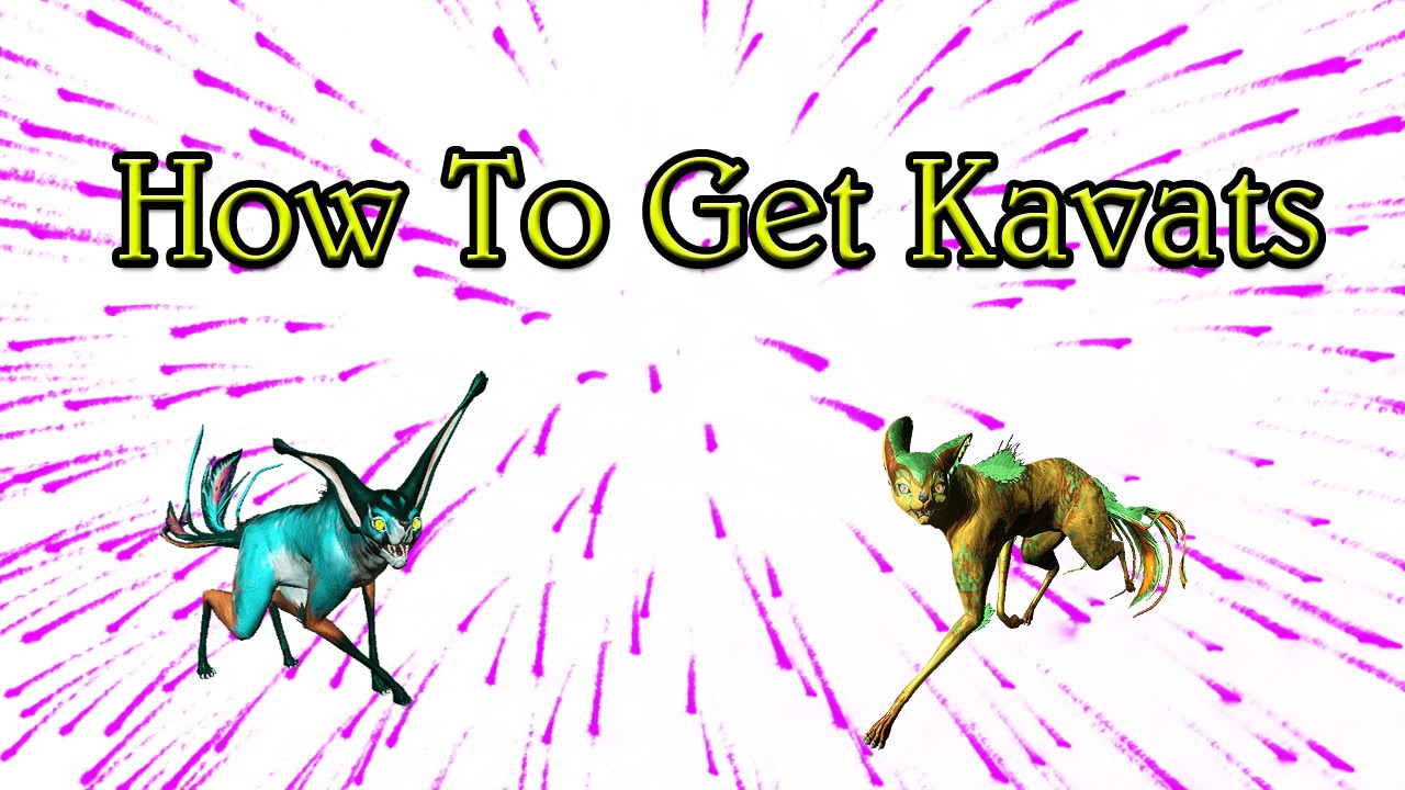 How Do I Get A Kavat