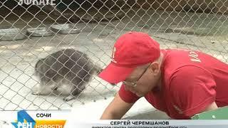 Сочинские волонтёры благоустроили вольеры для диких животных . Новости Эфкате
